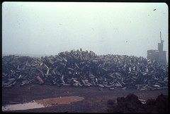 """""""The empty 105mm casings from Bravo battery"""", Khe Sanh, February/March 1968"""