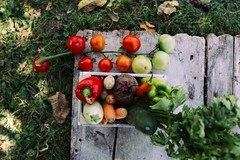 Variety of freshly harvested vegetables from above.