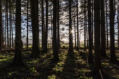 Auchterarder Woods 170201_0803
