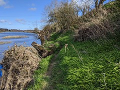 River Tweed at Wark, March 2020