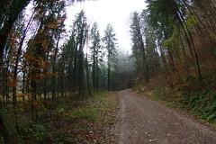 Herbst Nebel