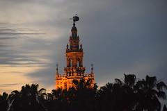 La Giralda al atardecer. Sevilla.