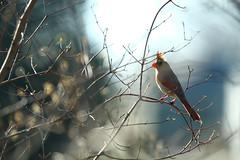 Missouri Wildlife
