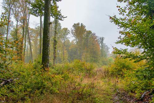 Forêt de Jolimont