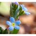 이름 모를 작은 꽃