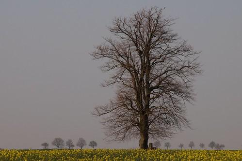 Baum und Bäume