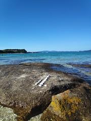 Conchas cercanas al Océano Atlántico. Praia de Xastelas. Illa de Arousa (Pontevedra)