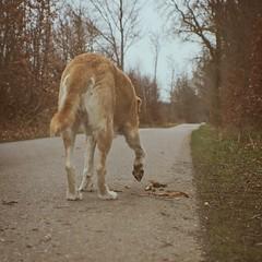 Hund macht das Holz klein(er)   29. März 2015   Tarbek - Schleswig-Holstein - Deutschland