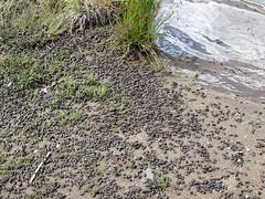 Tiny toads at Lost Lake