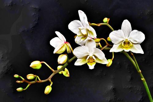Power of flowers....