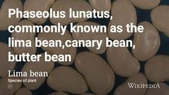 Γίγαντες πλακί @wikipedia moon bean 🌛