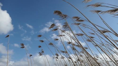 Waving reeds above, Woudsend