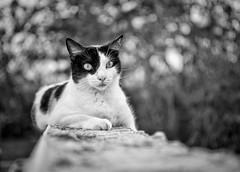 my favorite cat shots