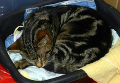 Charles sleeping in the washing-up bowl bed.