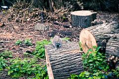 La ardilla y su tronco