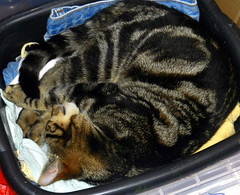 Charles curled up, asleep in the washing up bowl.