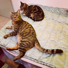 Deux chats sur le lit où j'ai dormi cette nuit-là.