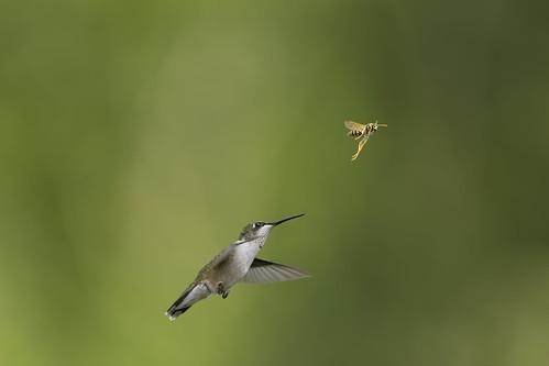 Fight or Fly_DSC4535