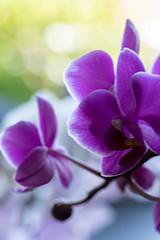 Confinement terrasse fleurs