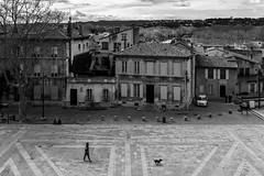 Promeneur de staff, Place du Palais à Avignon