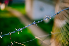 Barbed wire outdoors