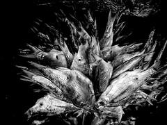 very dry fish