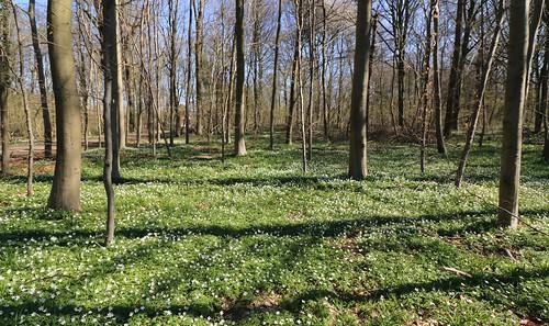 Bois des Manants