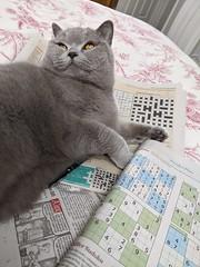 Mia attempts the Sudoku, April 2020
