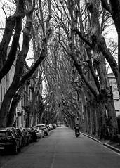Scooter Boulevard Raspail à Avignon
