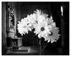 Flowers for Humanity