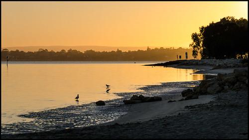 Swan River Sunrise