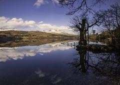 Loch Tay Reflections-1594
