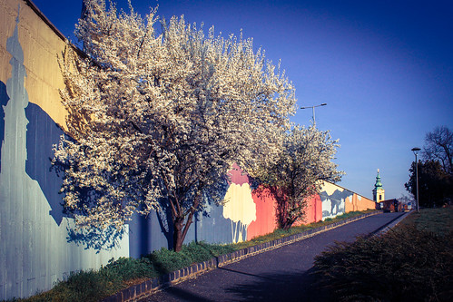 Spring near my home 💕🌸