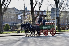 Heineken beer - Amsterdam