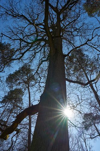 Baum mit Sonnenstern