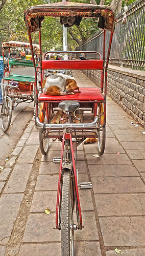 Rickshaw & Sleeping Doge Old Delhi crp 20200221_154305