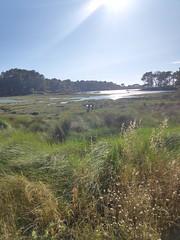 Marismas gallegas. Illa de Arousa (Pontevedra)