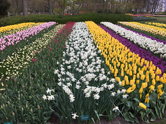 Keukenhof & Flower Fields