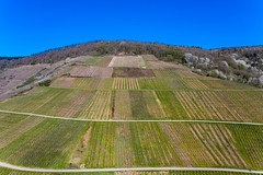 Aerial shot of vineyards in Rhineland-Palatinate, Germany on a sunny day in spring