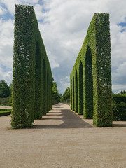 Alley between topiary arches in the Schwetzingen Palace Garden, Germany