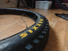 Warped Maxxis Shorty tyre.