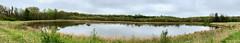 Merganser Pond Pnaorama