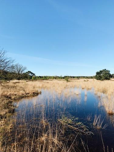 Oud Buisse Heide