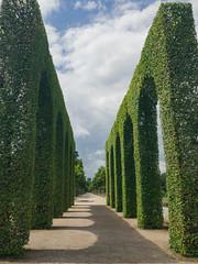 Allee zwischen Heckenbogen im Schlossgarten Schwetzingen, Deutschland