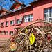 2020.04.09. Tojásfák a Polgármesteri Hivatal előtt - Fotók:PURGEL ZOLTÁN©