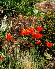 Garden Spring Summer  2020 (Lockdown)