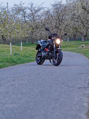 Yamaha MT-03 660