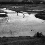 Mono Ninh Binh  (Kodak Tri-X)