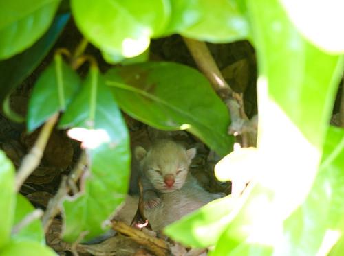 8328 - Kitten