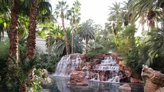 "Nevada - Las Vegas: The MIRAGE - palm trees, water features, and other ""rainforest"" flora  @ entrance area. A tropical paradise in the Desert!"